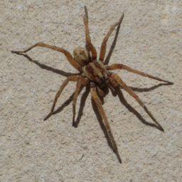 Уничтожение пауков в Темрюке